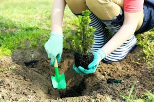 Výsadba jehličnanů, pozor - vyholují, ilustrační foto (www.shutterstock.com)