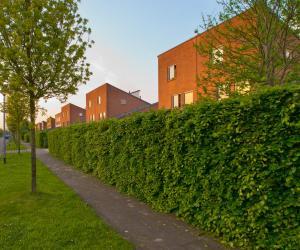 Živý plot, ilustrační foto (www.shutterstock.com)