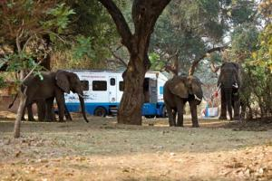 Momentka ze safari